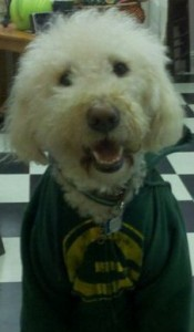 Luca the Packer Fan
