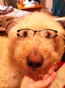 Luca the dog with Glasses